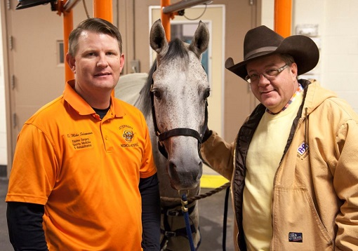 OSU Veterinarian's Innovation Helps Rescue Horse Continue Healing Children