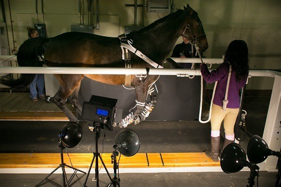A Leg Up for Horse Health
