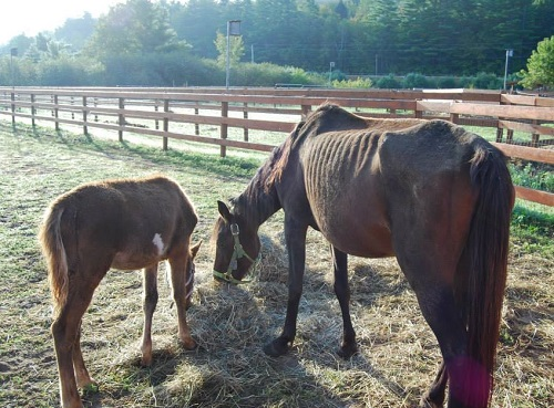 Jury: Shelley Wing Guilty of Horse Neglect