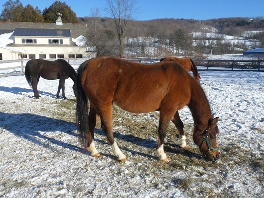 Animal Cruelty Charges Dropped against Arabian Breeder