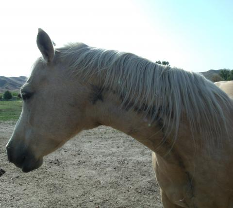 Horses and Snakebites: What Owners Need to Know