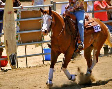 Reining horse Bella Gunnabe Gifted