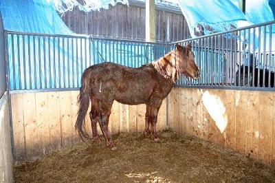 Beth Hoskins Sentenced for Horse Abuse