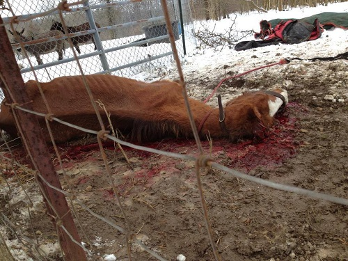 Jury Finds Former Horse Rescue Operator Guilty of Animal Cruelty