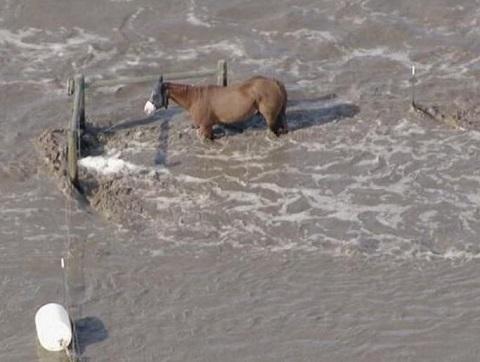 Planning Begins to Help Horse Owners in Flood Ravaged Colorado