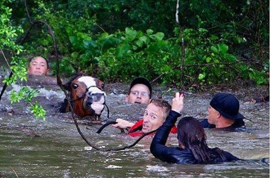 Horse Trainer Rescues Horses from Texas Rising Floodwaters April 2016