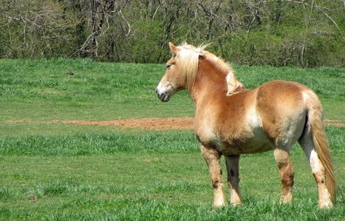 Frog Pond Farm Horse Rescue Settles Misappropriation Suit for $20K