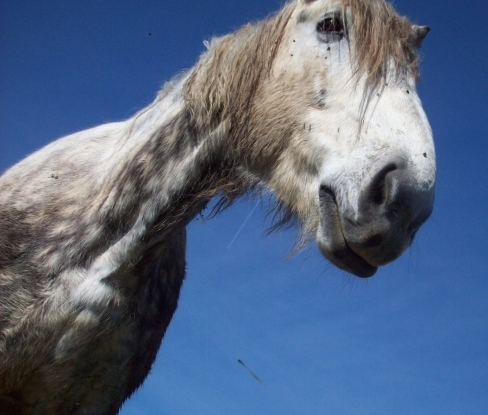 Frog Pond Farm Horse Rescue Accused of Misappropriating $50K