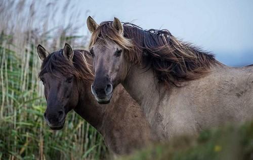 Unlocking Genetic Secrets of Dun Colored Horses