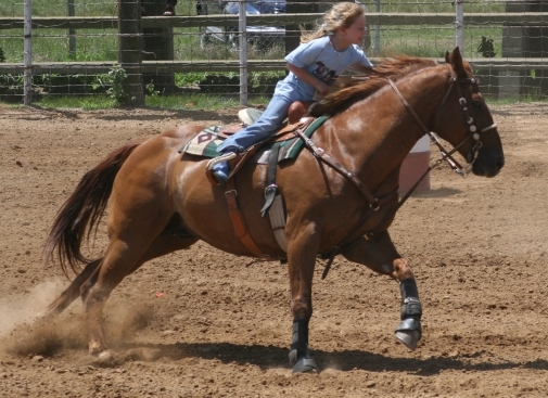 EHV-1 Diagnostic Tests Pending on Wisconsin Horses