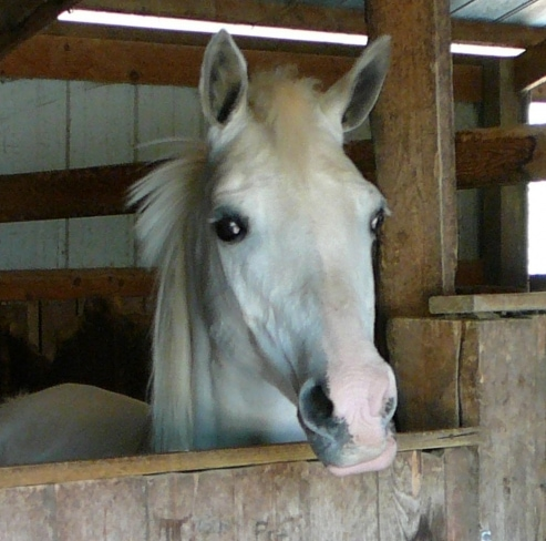 Second Case of EVH-1 Confirmed in Wisconsin Horse