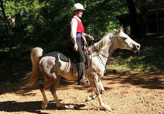 Endurance Horses Go the Distance with Hoof Protection