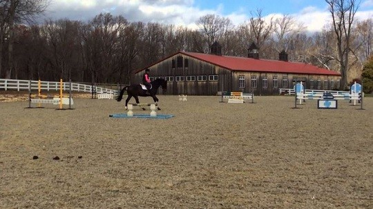 Equine Dies on Kentucky X-C Course