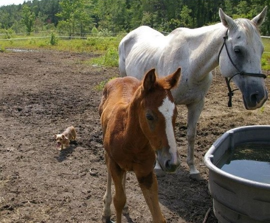 Georgia Natural Horsemanship Trainer Pleads Guilty to Animal Cruelty in Foal's Death