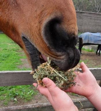 Connecticut Law Removes Horses' Vicious Label
