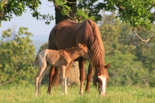 Rethinking Parasite Control in Horses