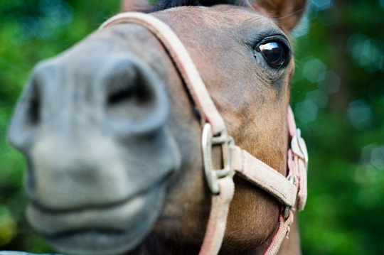 Horses' Facial Expressions Complex: Study