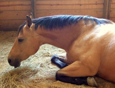 NJ Horse Farms Quarantined