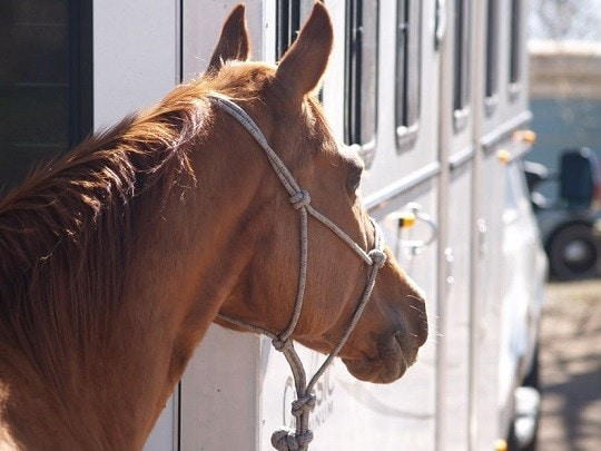 Oklahoma Horse Trailer Dealer Sentenced to Prison for Fraud