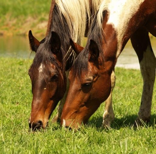 Equine Researchers Tackle Coronavirus