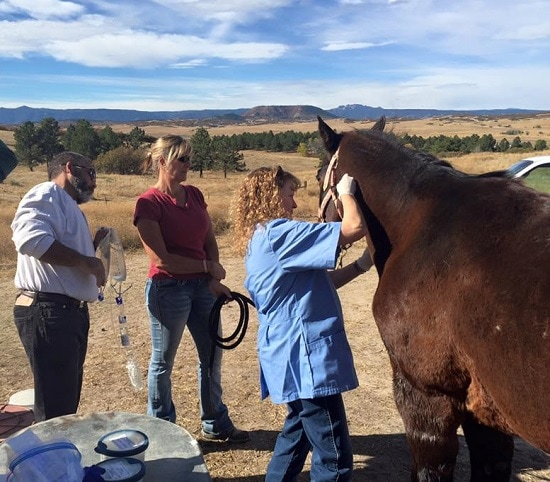 Drone with Infrared Technology Brings Missing Colorado Horse Home