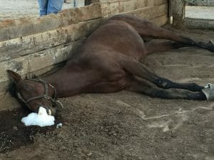 """Katie Flanigan says, """"this company needs to make major changes or needs to stop making horse feed."""""""