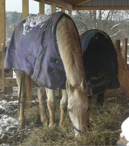 PA Boarding Stable Owner Not Guilty of Horse Cruelty