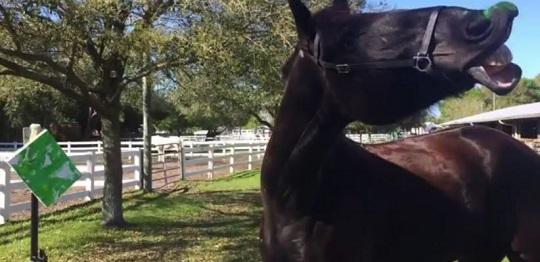 Florida Police Horse Painting Protégé