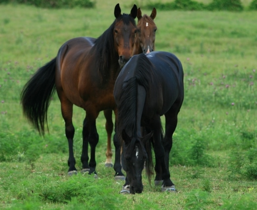 Wisconsin Horses Test Positive for EHV-1