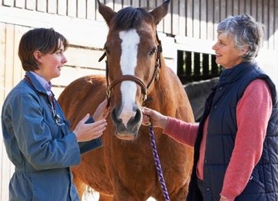 Equip Yourself for Horse Buying Success