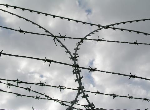 Horse Seller Gets Prison for Tampering with Coggins