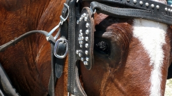 EHV-1 Confirmed at National Western Stock Show