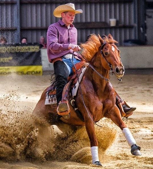 Two Illinois Horses Euthanized Due to EHV-1
