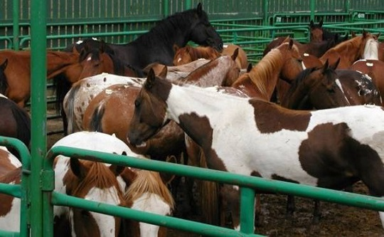 Horse Slaughter Defunding Extended