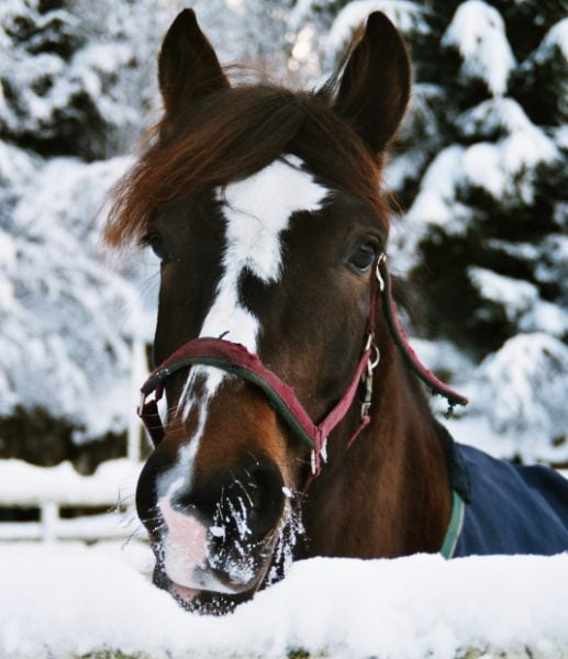 5 Cold Weather Tips to Keep Horses Safe