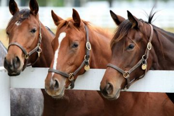 Finding Your Best Equine Attorney