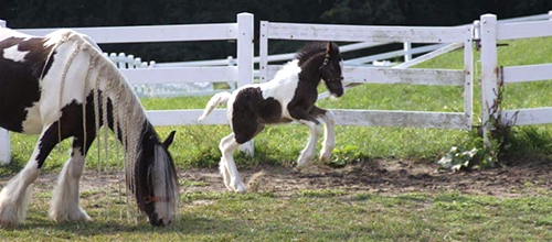 Veterinary Team Solves Post-Foaling Emergency