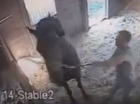 Horse Punched in Head