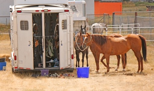 Horses Infected with EHV-1
