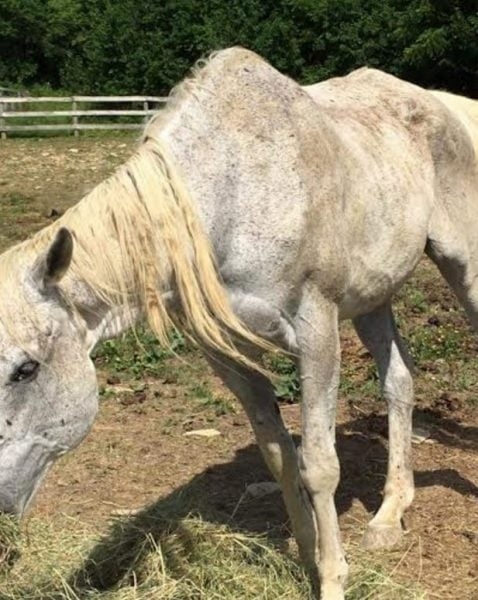 Maria Borell Allegations of Animal Cruelty