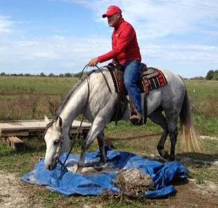 Robert Johnson on Grey Horse