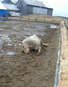 Cider found dead at Whisper Ridge Equine Sanctuary