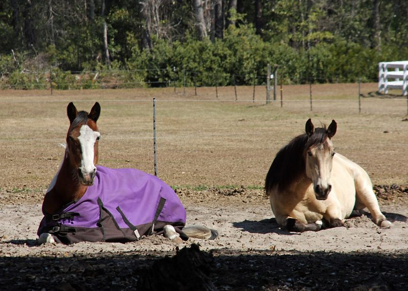 Do you feed ADM Horse Feed? There is a Class Action Lawsuit.