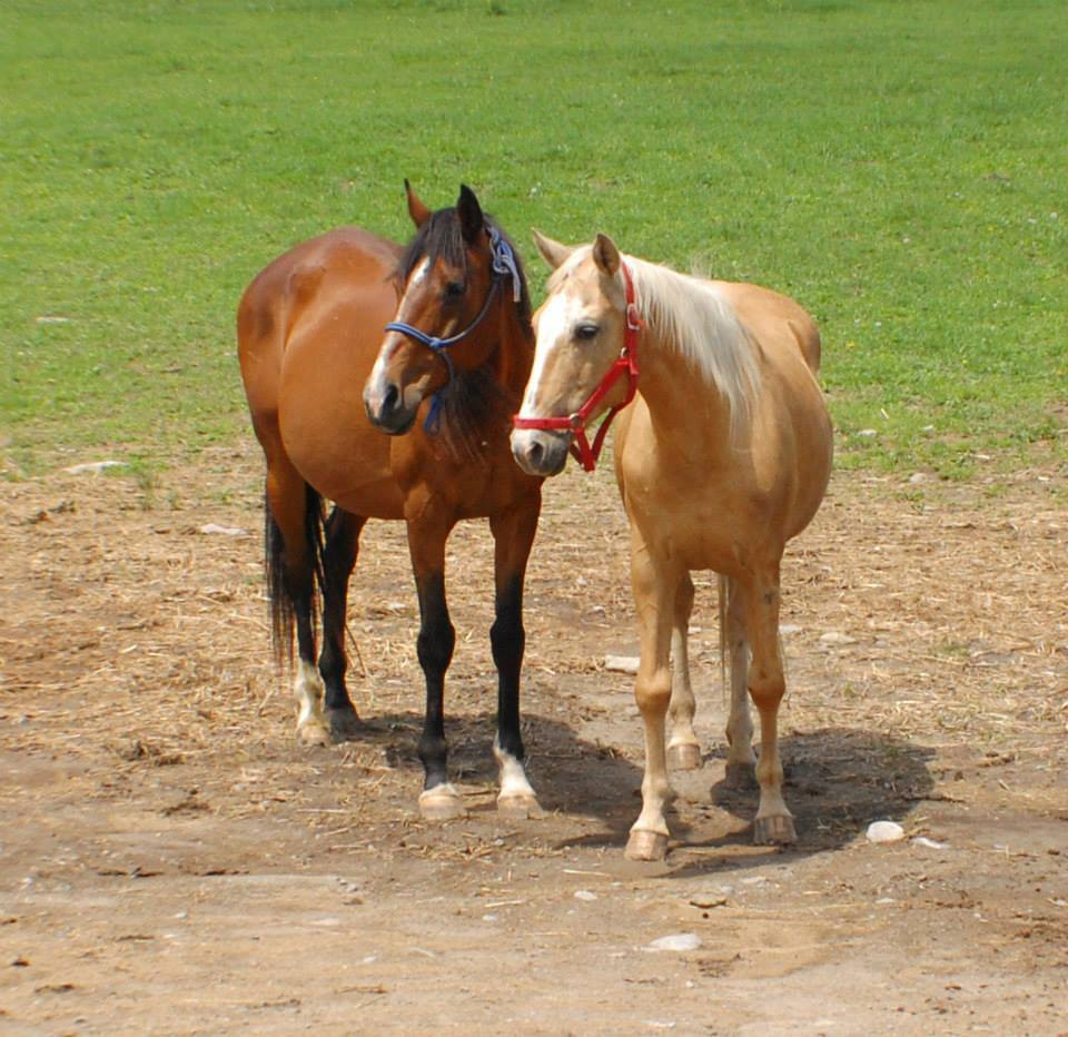 Horse Deaths Pose Questions about Equine 'Sanctuary' | Horse Authority