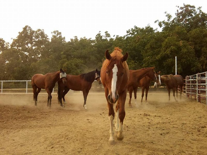 Detectives arrested Always and Forever Horse Rescue manager Jess Ahumada after an investigation revealed he diverted funds meant for the pseudo-horse rescue.