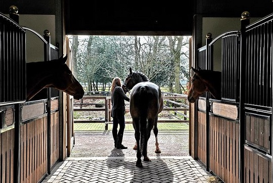 You're not alone if you've been the victim of horse sales fraud.