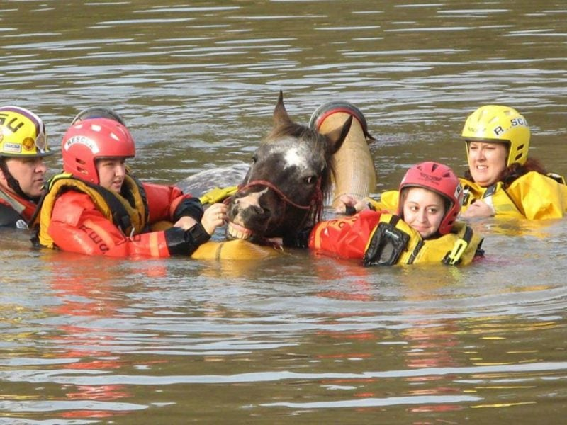 Efforts to save horses and care for them continue in Louisiana. You can help support the Louisiana State Animal Response Team by making a donation here to the organization.