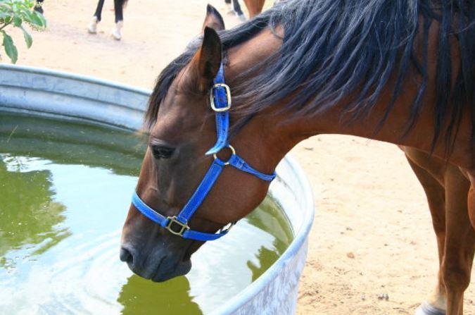 Keeping Equine eastern equine encephalitis away from horses