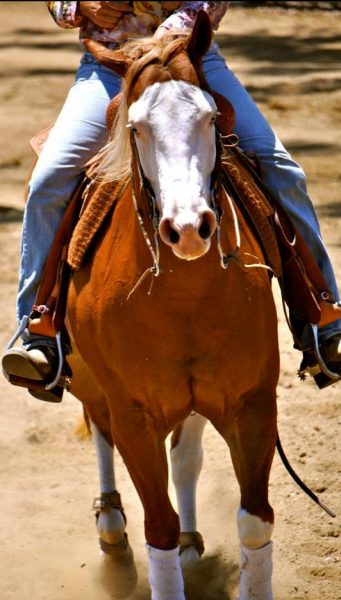 """Former reining trainer Mark Arballo left his former customer Martha Torkington's horse Bella """"bitted up"""" in a curb bit leading to her death."""