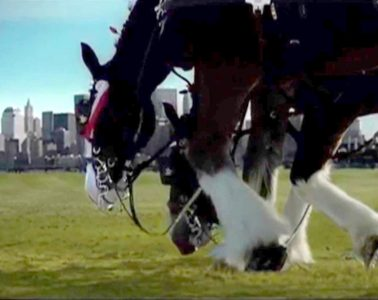 9-11 Clydesdale Respect